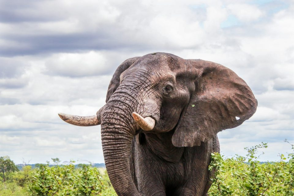 Tshembo Burpees For Conservation elephant
